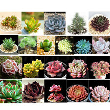 Various Home Garden Office Desktops Potted plants Flowers Succulents Plant Seeds