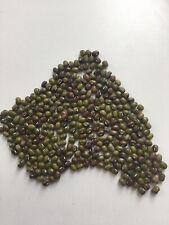 Mung Bean 400 Seeds Microgreen Permaculture Bird Treats Nin Gmo 20g