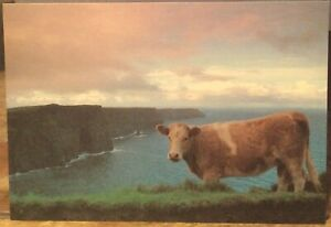 Irish Postcard Morning Cow CLIFFS OF MOHER Co Clare Liam Blake Real Ireland 22