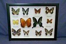 More details for vintage framed butterflies   lot 2