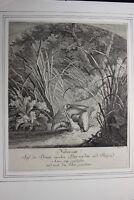 Johann Elias RIDINGER (1698-1767) - KUPFERSTICH AUS DEM 18-TEN JHDT STICH XVII