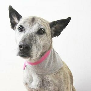 Heather Grey Jersey with Pink Trim Bandana for Dogs (Size S) - Free Shipping