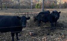 Dry Cow Manure 6 Lbs