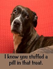 Metal Fridge Magnet Know You Stuffed Pill In Treat Dog Humor Dogs