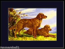 English Print Golden Retriever Dog Duo Art Picture