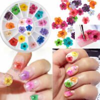 Beauty Real Dried Dry Flowers 3D Nail Art Decoration Design DIY Tips Manicure