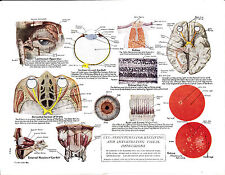 Medical print. The Eye; Structures for receiving visual impressions Circa 1950