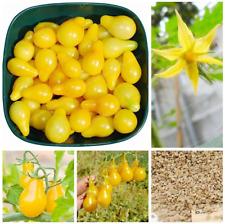 Yellow Gold Pear Tomato Fresh Garden Plants Fruit Vegetable Bonsai 100 Pcs Seeds
