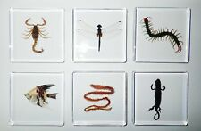Centipede & Dragonfly & Scorpion & AngelFish & Clamworm & Newt 6 Collection Set
