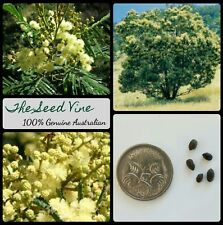 20+ BLACK WATTLE TREE SEEDS (Acacia mearnsii) Native Firewood Fast Growing