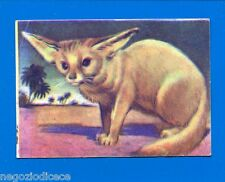 ANIMALI - Lampo 1964 - Figurina-Sticker n. 67 - FENNEC -New