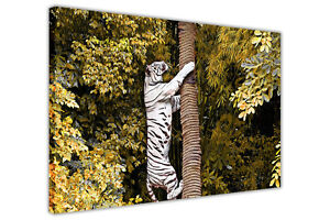 WHITE TIGER CLIMBING A TREE ON CANVAS WALL ART PICTURES WILD ANIMAL PRINTS DECO