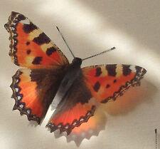 British Butterflies 6 Tortoiseshell in Flight 3D Home Decorations HAND MADE