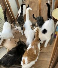 Support Cat Rescue Please Help us to help them.Registered Charity Nos 1158022