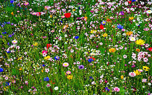 Framed Print - Colourful Wild Flowers in a Meadow (Picture Poster Landscape Art)