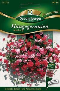 Hänge-Geranien Mischung - Samen von Quedlinburger Saatgut