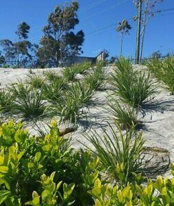 Jute Matting Slit 1.83M X 25M 620gsm Landscape Erosion Weed Mat Soil Blanket