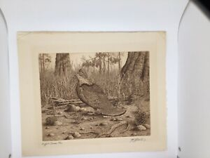 Ruffled Grouse 1943–44 Henry Emerson Tuttle American