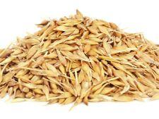 50 Graines d'Avoine Cultivée Bio,  Avena sativa Organic Oat Seeds
