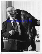 Richard Dysart Terrific Original Tv Photo L.A. Law *Chimpanzee*