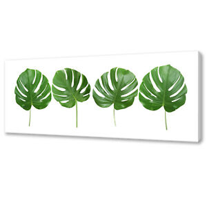 GREEN TROPICAL MONSTERA LEAVES BOTANICAL BOX CANVAS PRINT WALL ART PICTURE