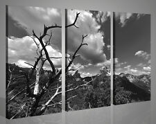 Quadri moderni stampe su tela I LOVE THIS TREE bianco nero 130 x 90