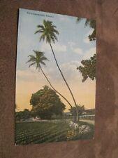 Early postcard - Haiwaiian Twin coconuts - Hawaii