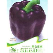 FD1226 Purple Sweet Pepper Seed Capsicum Organic Vegetable *1 Pack 8 Seeds* ✿