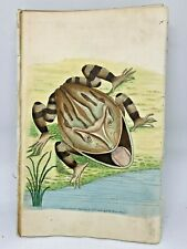 Horned Frog - 1783 RARE SHAW & NODDER Hand Colored Copper Engraving