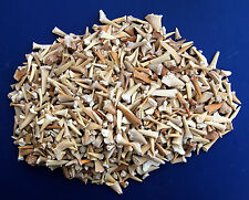 Fossil Shark Teeth, 1 Pound Bulk Mix, From  Morocco