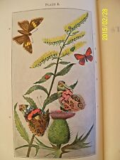 "Vintage 1931 ""MANUAL for the STUDY of INSECTS"" by COMSTOCK & HERRICK,ILLUSTRATED"