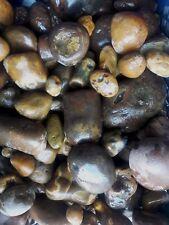 Black River agate rough uncut,  (4) four pounds