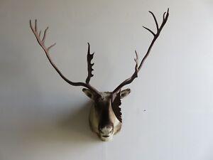 Caribou Shoulder Mount.  Great Cabin/Man-cave/Lodge item!