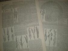 Woodcut/Block Original Botanical Art Prints