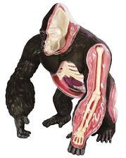 Thames & Kosmos anatomía Modelo Puzzle Gorila Mono 29pc