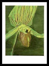 Luc Tuymans Orchid 1998 Poster Bild Kunstdruck im Alu Rahmen in schwarz 90x70cm