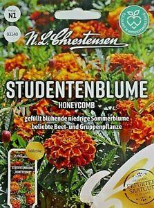 🌹🌺Blumensamen Studentenblume Honeycomb Blumen MHD Januar 2024🌺🌹