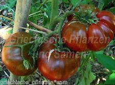 Black aisberg Tomate Black Healthier Like Red Tomaten 10 fresh seeds Balcony