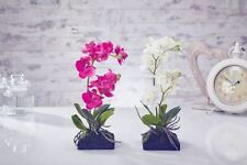 Unbranded Orchid Potted Dried & Artificial Flowers