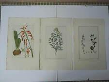BUCHOZ Le grand jardin de  l'univers 1785-1791 49 x 30 cm 3 planches 64+66+76