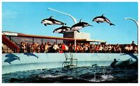 High Flying Dolphins Marineland Of The Pacific California Postcard PC1338