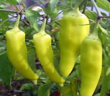 Capsicum Sweet Banana 30 heirloom seeds for your edible vegetable garden