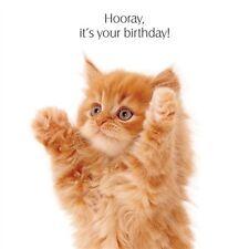 "Pet Pawtrait Birthday Card - Ginger Kitten ""Big Hug!"""