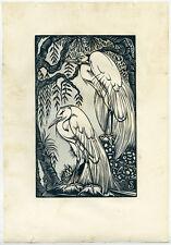 Original Print-BIRD-EGRETS-Schonk-ca. 1930
