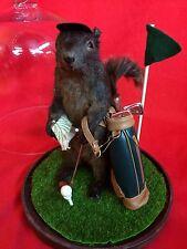 *Taxidermy Black Squirrel Golfer Glass Dome Dsply-Anthropomorphic-putter-golf