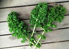 KALE 'Dwarf Blue Curled' 150+ seeds vegetable garden winter salad green HEALTHY