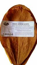 Indian Almond Leaf | Catappa Ketapang | Naturally Aged & Dried 50 Gram