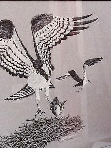 T. Graham signed Black & White Print of Osprey Birds, Nest and Fish - Ltd. Ed.