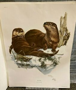 Richard Timm - Wildlife Collection - River Otter Print w/ Sleeve