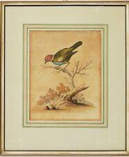 George Edwards Kupferstich 18. Jh. handkoloriert Büttenpapier Vogel 42 x 36 cm